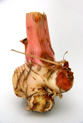 Picture of Galangal Root