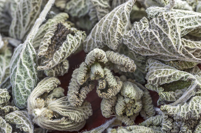 Dried Horehound Herb.