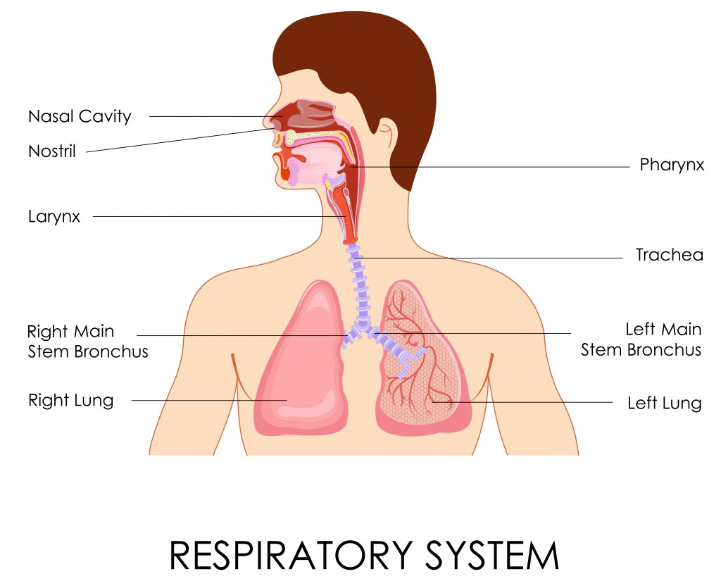 Natural Treatment For Fluid On The Lungs